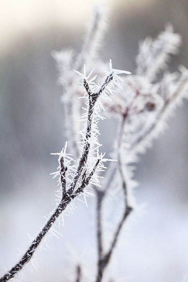 Hoarfrost in Minnesota 2013
