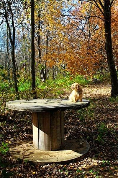October Puppy