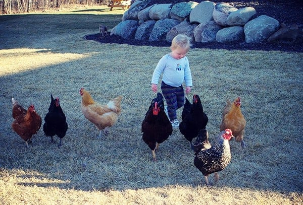 olivia and chickens