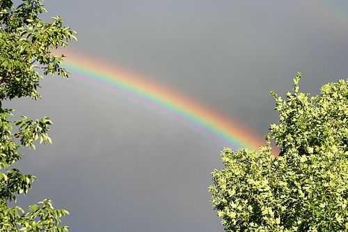 IMG_3111.rainbow