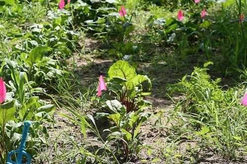 IMG_4414.garden