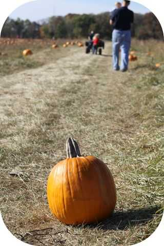 IMG_1430.pumpkin-patch