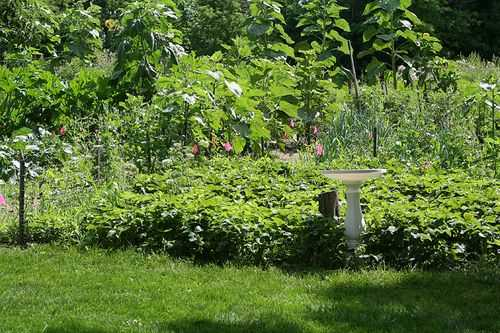 IMG_4418.garden